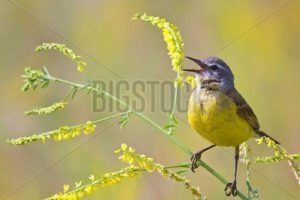 Audiology Bird Singing